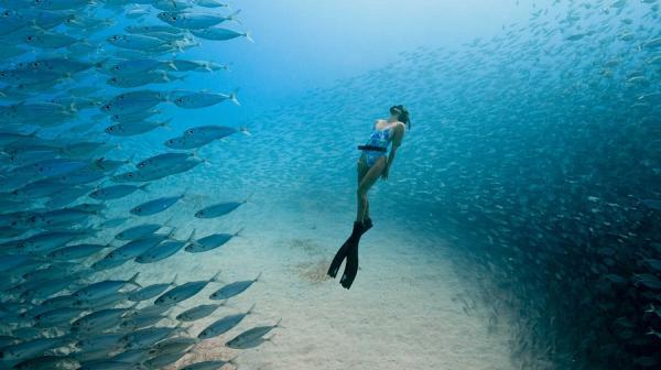 image of diver and fish