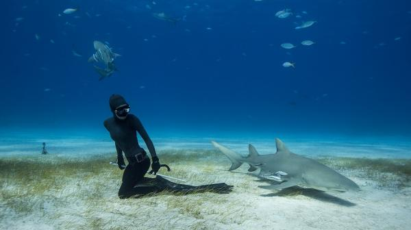 Image of diver and shark by Eusebio Saenz de Santamaria