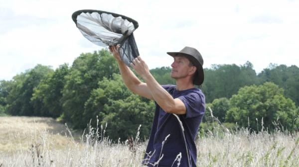 image of Dave Goulson catching insects with a net